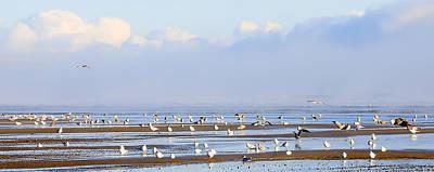 Seagulls On A Beach Art Print by Svetlana Sewell