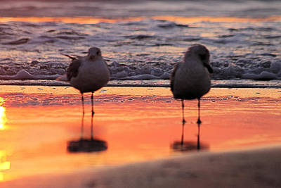 Photograph - Seagulls On An Orange Beach by Robert Banach