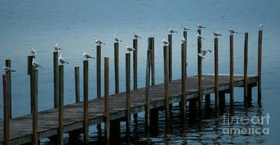 Photograph - Seagulls On Dock by Mim White