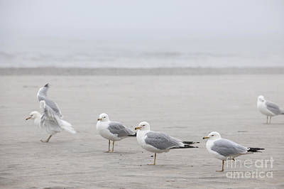Seagulls On Foggy Beach Print by Elena Elisseeva