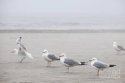 Animals Photos - Seagulls on foggy beach by Elena Elisseeva