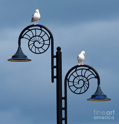 Photograph - Seagulls On Street Lamps by Colin Rayner