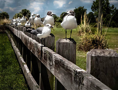 Photograph - Seagulls On The Fence  by Debra Forand