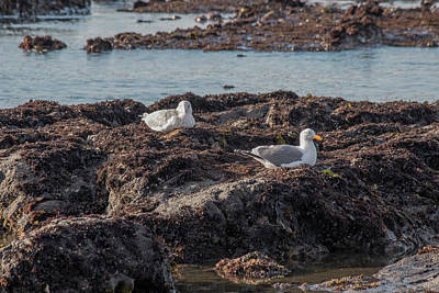 Photograph - Seagulls On The Rocks by Teresa Wilson