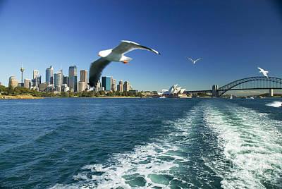 Sydney Vacation Photograph - Seagulls Over Sydney Harbor by Dana Edmunds - Printscapes