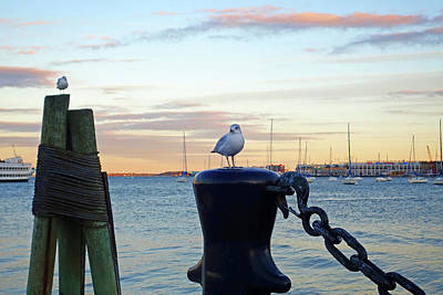 Photograph - Seagulls Overlooking The Boston Harbor Boston Ma by Toby McGuire
