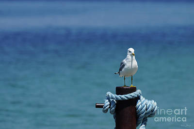 Photograph - Seagulls Paradise At Mackinac by Jennifer White