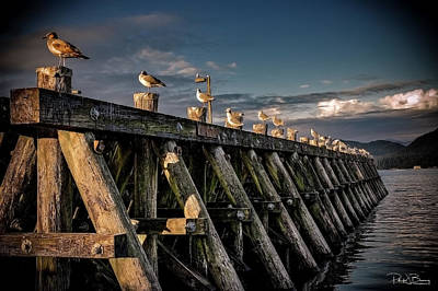 Photograph - Seagulls by Patrick Boening