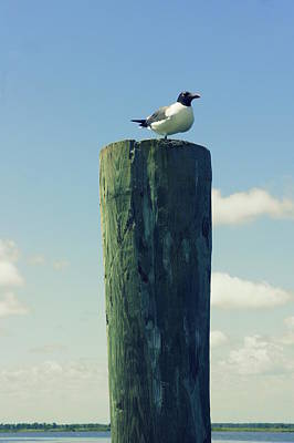 Photograph - Seagulls Rest by Laurie Perry