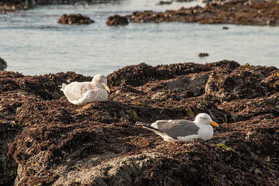 Photograph - Seagulls Resting On The Rocks by Teresa Wilson