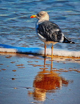 Photograph - Seagull's Shadow by Peg Runyan