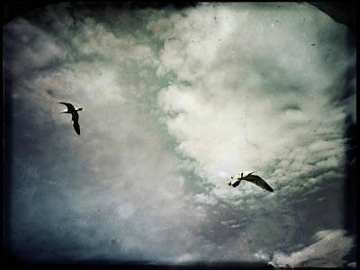 Photograph - Seagulls by Siegfried Ferlin