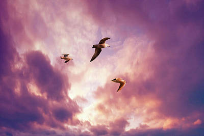 Digital Art - Seagulls by Steve Ball