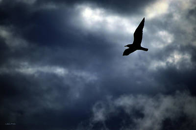 Photograph - Seagulls Stormy Flight by Lesa Fine