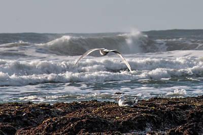 Photograph - Seagulls by Teresa Wilson