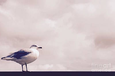 Photograph - Seagull's View by Samiksa Art