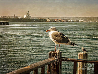 Photograph - Seagulls Waiting For The Boats by Gabriele Pomykaj