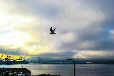 Photograph - Seahawkin by D Justin Johns
