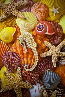 Seashells Photograph - Seahorse And Assorted Sea Shells by Garry Gay