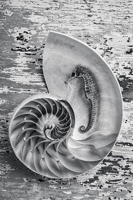 Photograph - Seahorse And Nautilus Shell by Garry Gay