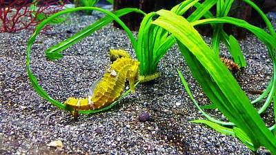 Photograph - Seahorse And Plants by Rob Hans