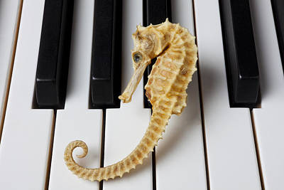 Keyboards Photograph - Seahorse On Keys by Garry Gay