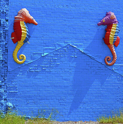 Photograph - Seahorses 1 by Ron Kandt