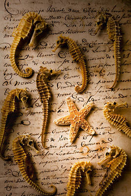 Seahorse Wall Art - Photograph - Seahorses And Starfish On Old Letter by Garry Gay