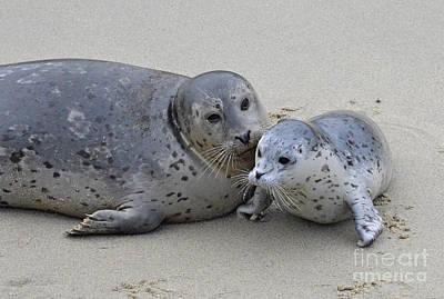 Seal Baby  Art Print by Judy Grant