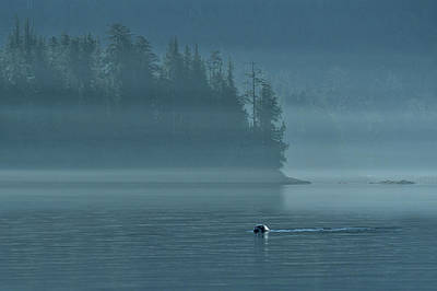 Haida Gwaii Photograph - Seal by Christian Heeb