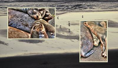 Photograph - Seal Collage 3 by Jerry Sodorff