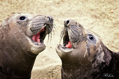 Seal Duet Original by Patricia Stalter