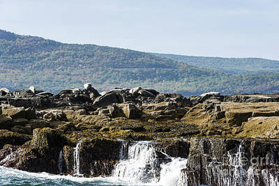 Photograph - Seal Island by Anthony Baatz
