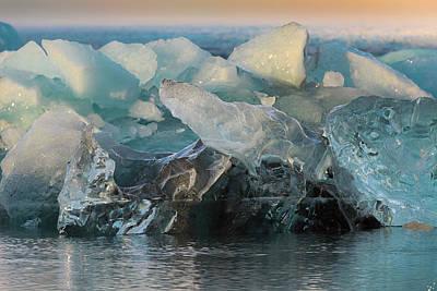 Photograph - Seal Nature Sculpture by Allen Biedrzycki