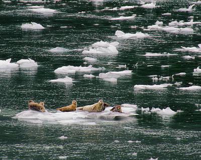 Photograph - Seal Team 6 by Steven Richardson