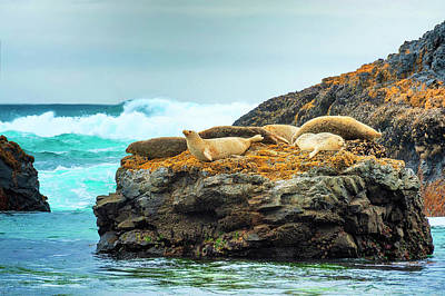 Photograph - Seals At Seal Rock Beach by Dee Browning