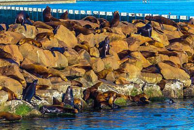 Seals On Jetty Rocks Print by Garry Gay