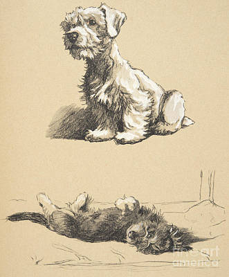 Best Friend Drawing - Sealyham And Rough Dachund Puppy, 1930 by Cecil Charles Windsor Aldin