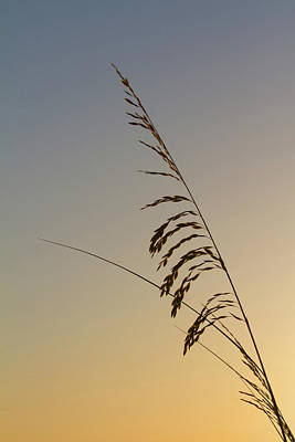 Photograph - Seaoats At Dawn by Paul Rebmann