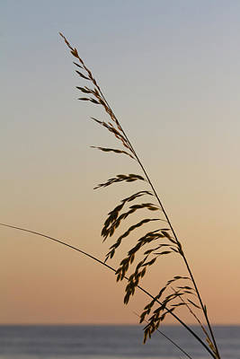 Photograph - Seaoats By The Sea by Paul Rebmann
