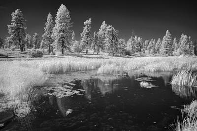 Searching The Pond Art Print by Jon Glaser
