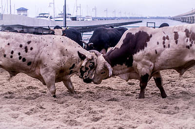 Of Rodeo Bucking Bulls Photograph - Seascape Bsl E50c by Otri Park