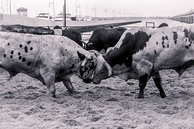 Of Rodeo Bucking Bulls Photograph - Seascape Bsl E50d by Otri Park