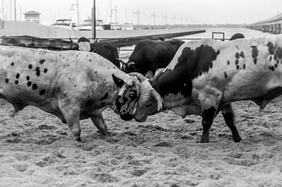 Of Rodeo Bucking Bulls Photograph - Seascape Bsl E50e by Otri Park