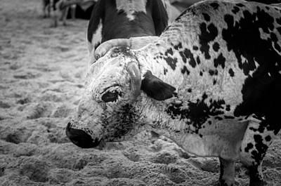 Of Rodeo Bucking Bulls Photograph - Seascape Bsl E50k by Otri Park