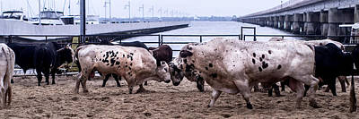 Of Rodeo Bucking Bulls Photograph - Seascape Bsl E50s by Otri Park