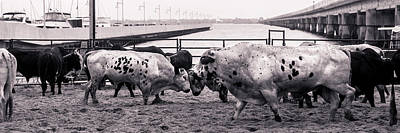 Of Rodeo Bucking Bulls Photograph - Seascape Bsl E50t by Otri Park
