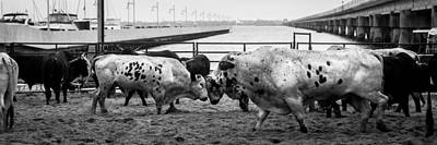 Of Rodeo Bucking Bulls Photograph - Seascape Bsl E50u by Otri Park