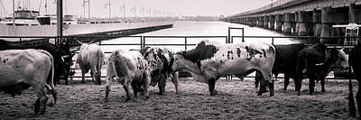 Of Rodeo Bucking Bulls Photograph - Seascape Bsl E50w by Otri Park
