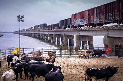 Of Rodeo Bucking Bulls Photograph - Seascape Bsl E60c by Otri Park